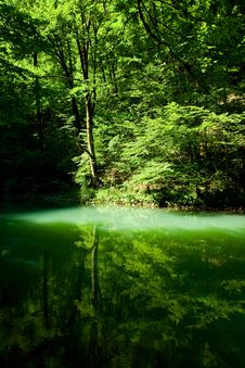 Forest River Source Scene Royalty Free Stock Image