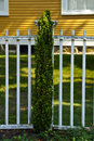 Free Fence With Tree Royalty Free Stock Photography - 6041107