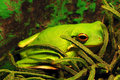 Free Green Frog Royalty Free Stock Photo - 6045245