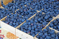Free Blue Berries Royalty Free Stock Images - 6045349