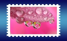 Free Unname Fresh Stamp Stock Photography - 6041022