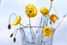 Free Yellow Poppies 4 Stock Photography - 6041562