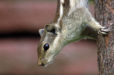 Free Squirrel Stock Images - 6042924
