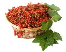 Free Red Currant Royalty Free Stock Photo - 6043395