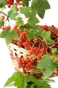 Free Red Currant Stock Image - 6043411