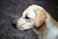 Free Muddy Puppy Stock Photo - 6044260