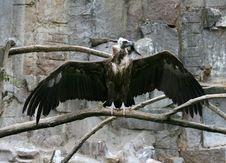 Free Bird Of Prey Stock Images - 6044354