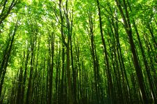 Free Forest Stock Photo - 6044580