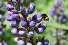 Free Bee Royalty Free Stock Photo - 6044855