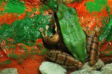 Free Frog Royalty Free Stock Photo - 6045125