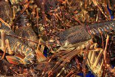 Free Crayfish Stock Image - 6046241