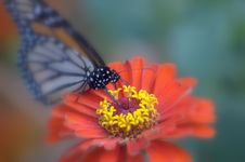 Free Butterfly Stock Image - 6047861