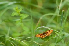 Free Butterfly Stock Images - 6048554