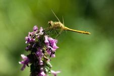Free Dragonfly Stock Photography - 6048752