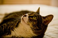 Free Cat Looking Up Royalty Free Stock Image - 6049456