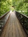 Free Forest Bridge Royalty Free Stock Photo - 6058995