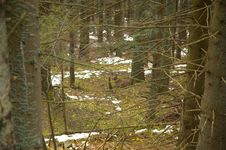 Free Deer Between The Forest. Stock Photos - 6050593