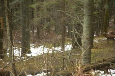 Free Deers Brooding Stock Photos - 6050603