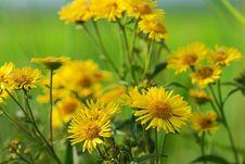Free Yellow Wild Flower Stock Photography - 6051002