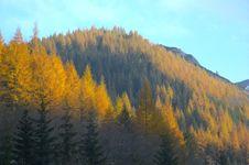Free Autumn. Stock Image - 6051291