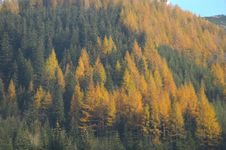 Free Forest In Autumn. Stock Images - 6051314