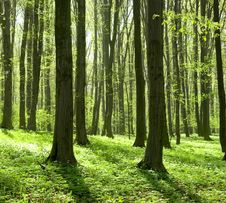 Free Forest Royalty Free Stock Image - 6051666