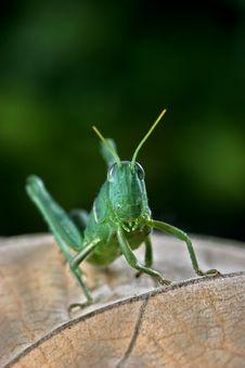 Free Locust Stock Image - 6051811