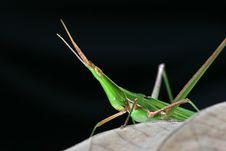 Free Locust Stock Images - 6051944