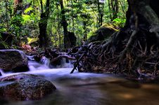Free River Roots Royalty Free Stock Image - 6053646