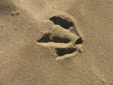 Free Birds Foot Print Stock Images - 6053704