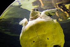 Free A Turtle Stock Photo - 6053730