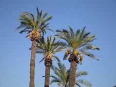 Free Palm Tree Stock Images - 6054824