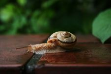 Free Snail Stock Photos - 6055633