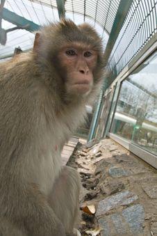 Free Monkey In Zoo Stock Photos - 6055873