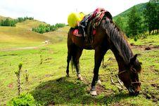 Free Horse Stock Photo - 6057510