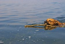 Free Dog In The Lake Royalty Free Stock Photos - 6057558