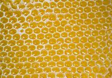 Free Honeycomb Royalty Free Stock Photo - 6058375