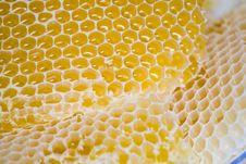 Free Honeycomb Stock Photography - 6058422