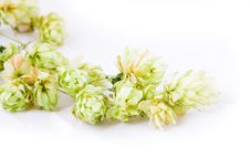 Hop Stock Images