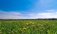 Free Summer Meadow Stock Photography - 6058722