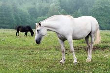 Free White Horses Stock Images - 6058794