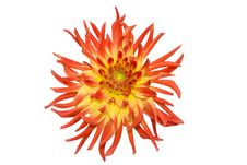 Free Beautiful Red Flower Royalty Free Stock Image - 6058806