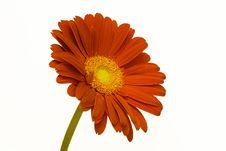 Free Beautiful Flower Royalty Free Stock Photo - 6059595