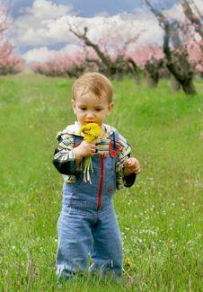 Baby Boy With Dandelions Stock Photo