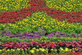Free Flower Land Stock Images - 6061814