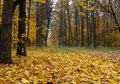 Free Autumn In The Park Royalty Free Stock Photo - 6063445