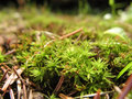 Free Moss & Pine Needles Macro Stock Photos - 6065293