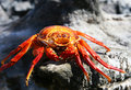 Free Dead Crab Stock Images - 6065524