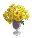 Free Camomiles Stock Image - 6066571