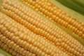 Free Fresh Corn On The Cob Royalty Free Stock Images - 6067289